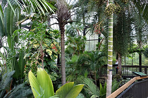 Palms clean the air in your home