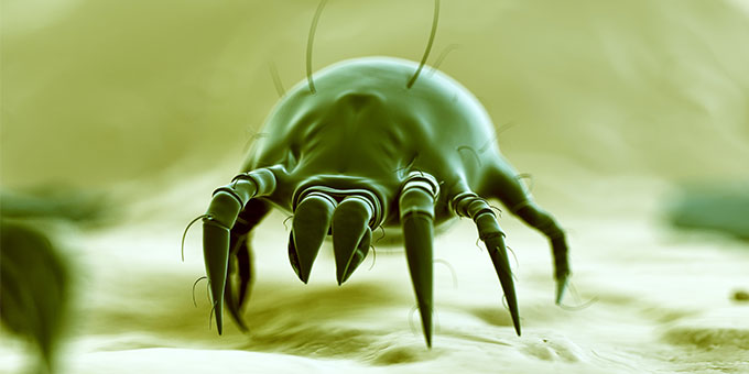 dust mite illustration
