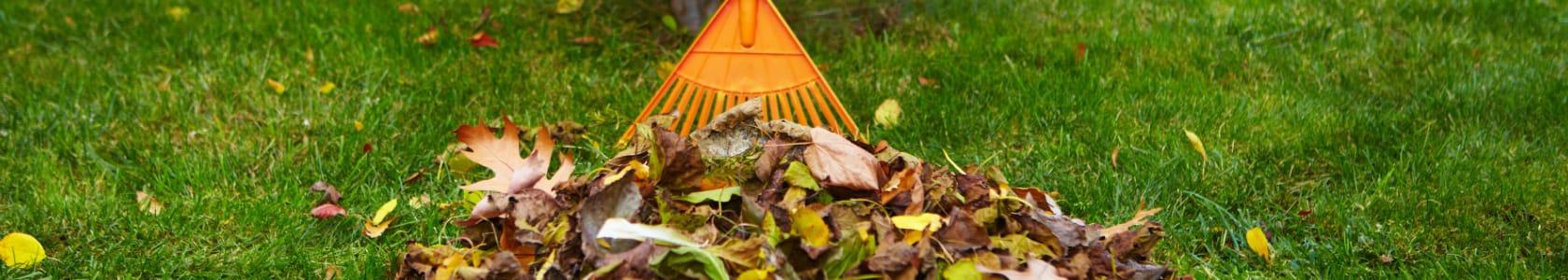 a rake raking leaves