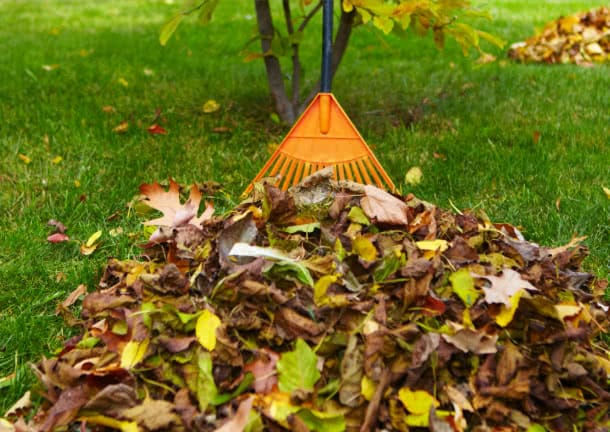 a rake raking leaves