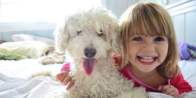 Hypoallergenic poodle with child