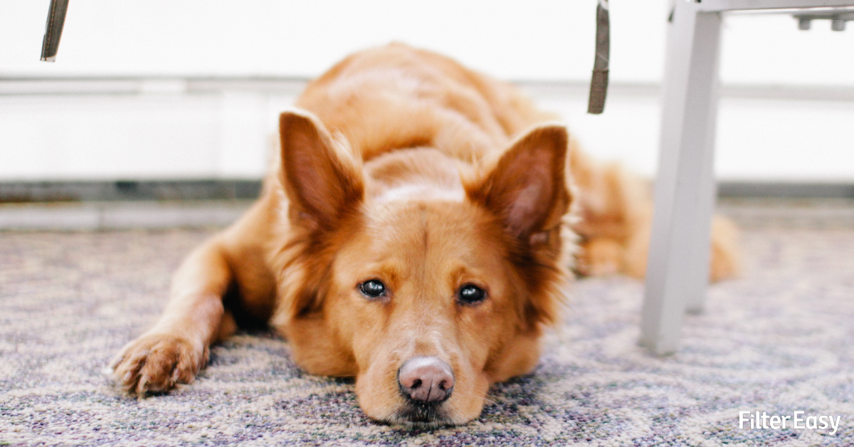 How To Reduce Pet Dander and Pet Odors in the Home