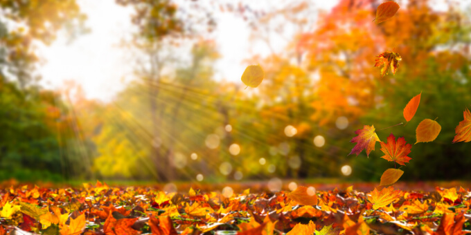The-leaves-falling-get-your-home-ready