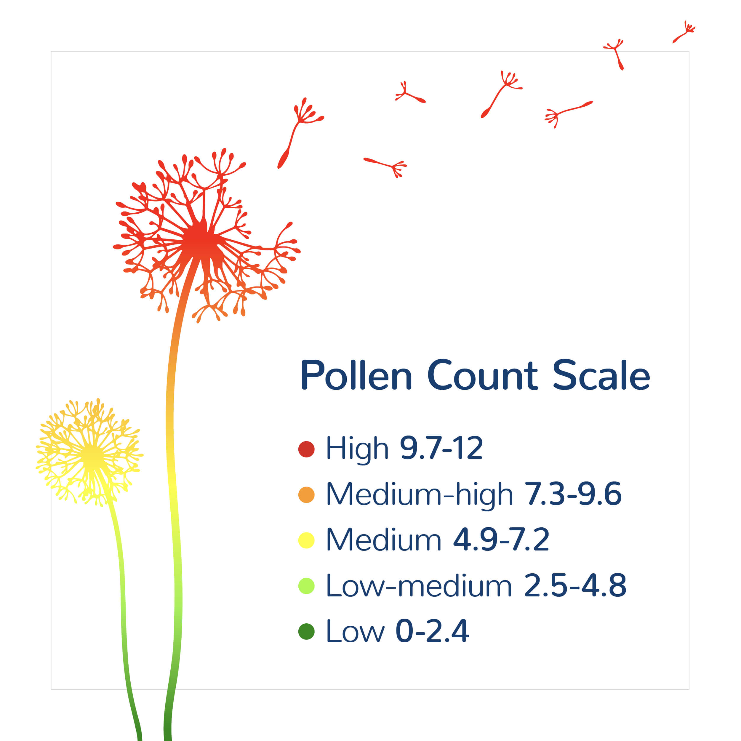 pollen scale